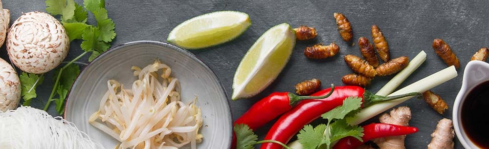 eating-insects-blog